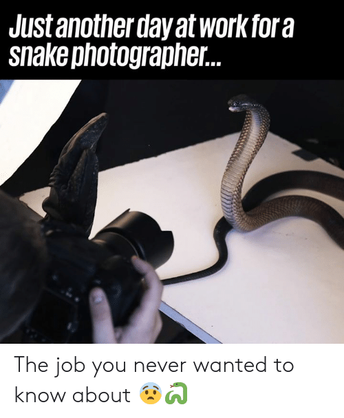 Dank, Never, and 🤖: Just another day at workfora  snakephotographer. The job you never wanted to know about 😨🐍