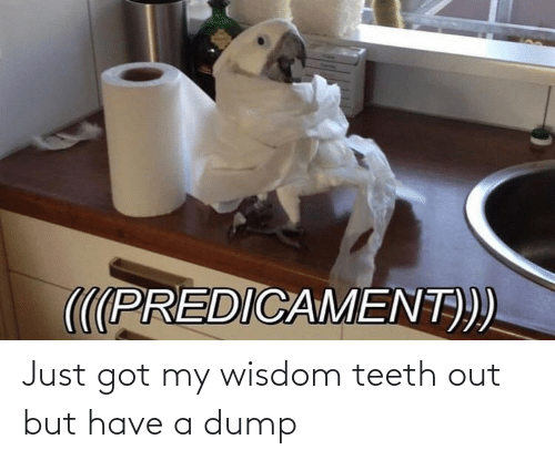 Wisdom: Just got my wisdom teeth out but have a dump