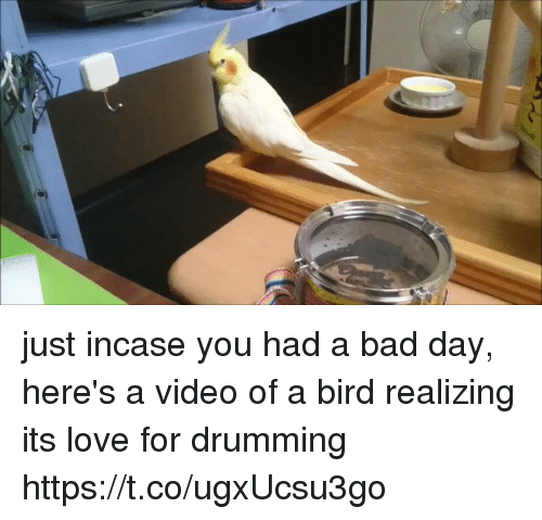 drumming: just incase you had a bad day, here's a video of a bird realizing its love for drumming https://t.co/ugxUcsu3go