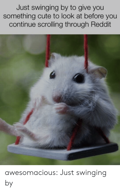 Cute, Reddit, and Tumblr: Just swinging by to give you  something cute to look at before you  continue scrolling through Reddit awesomacious:  Just swinging by