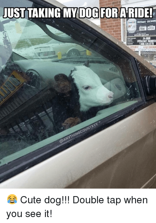 Cute, Memes, and When You See It: JUST TAKING MY D0G FORA RIDE!  PROPANE EXCHANG  2000 4900 😂 Cute dog!!! Double tap when you see it!