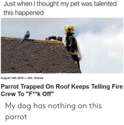 "Fire, Thought, and Dog: Just when I thought my pet was talented  this happened  August 14th 2018-43K Shares  Parrot Trapped On Roof Keeps Telling Fire  Crew To ""F**k Off"" My dog has nothing on this parrot"