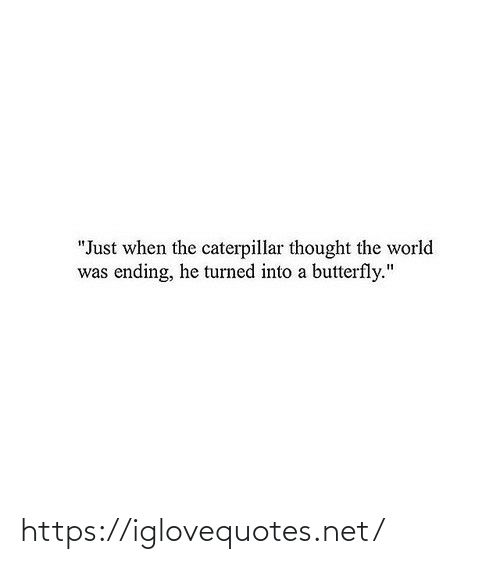 "When The: ""Just when the caterpillar thought the world  was ending, he turned into a butterfly."" https://iglovequotes.net/"