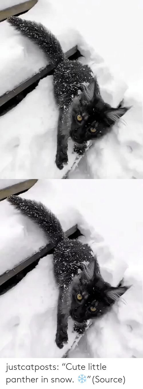 """cute: justcatposts:  """"Cute little panther in snow. ❄️""""(Source)"""