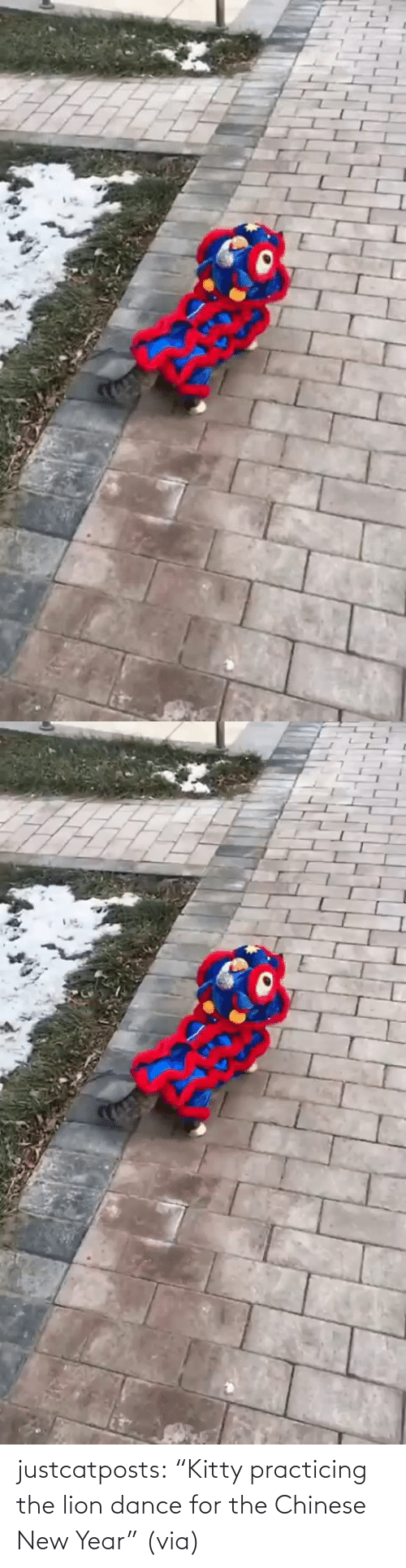 """new: justcatposts:  """"Kitty practicing the lion dance for the Chinese New Year""""(via)"""