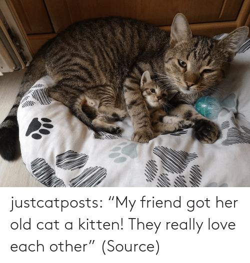 "Other: justcatposts:  ""My friend got her old cat a kitten! They really love each other"" (Source)"