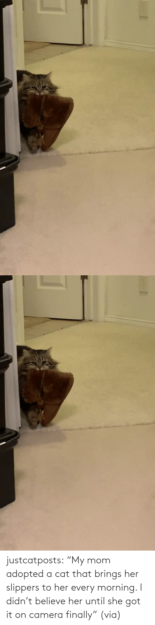 "Mom: justcatposts:  ""My mom adopted a cat that brings her slippers to her every morning. I didn't believe her until she got it on camera finally"" (via)"