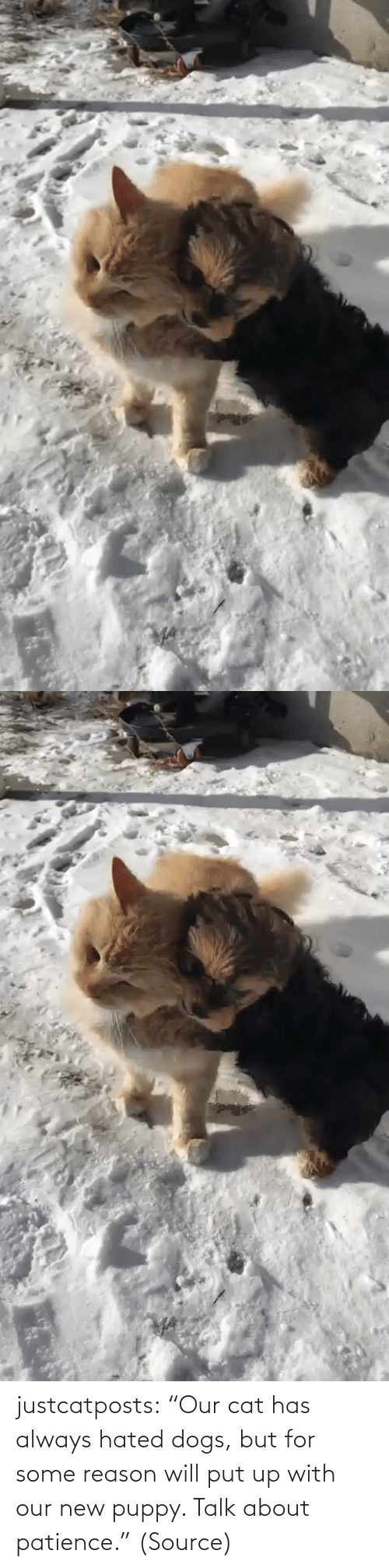 """Reason: justcatposts:  """"Our cat has always hated dogs, but for some reason will put up with our new puppy. Talk about patience.""""(Source)"""