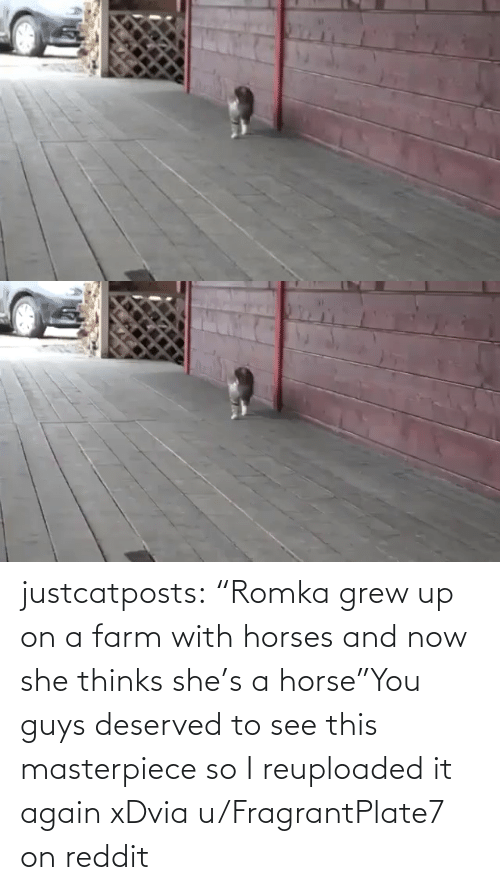 "Horse: justcatposts:  ""Romka grew up on a farm with horses and now she thinks she's a horse""You guys deserved to see this masterpiece so I reuploaded it again xDvia u/FragrantPlate7 on reddit"