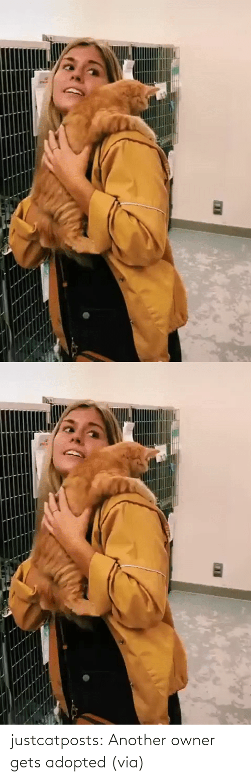 Imgur: justcatposts: Another owner gets adopted (via)