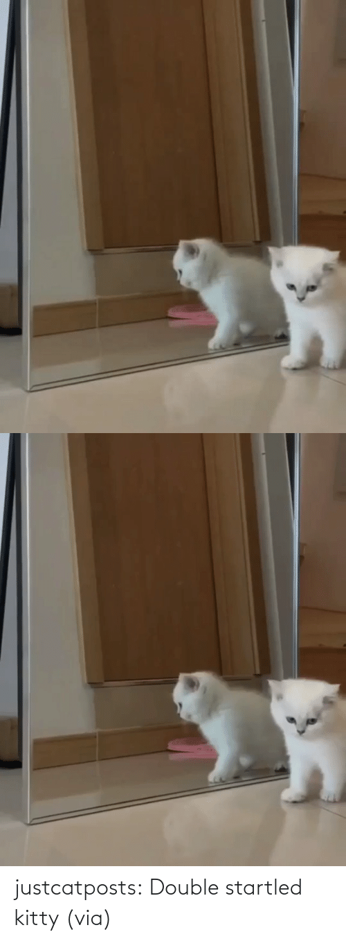 via: justcatposts:  Double startled kitty(via)