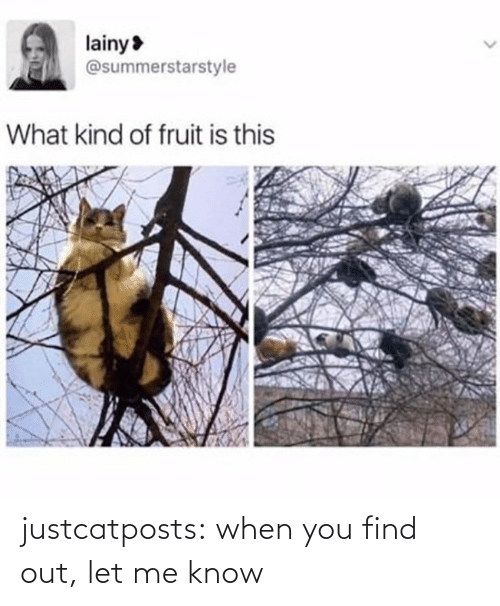 let me: justcatposts:  when you find out, let me know