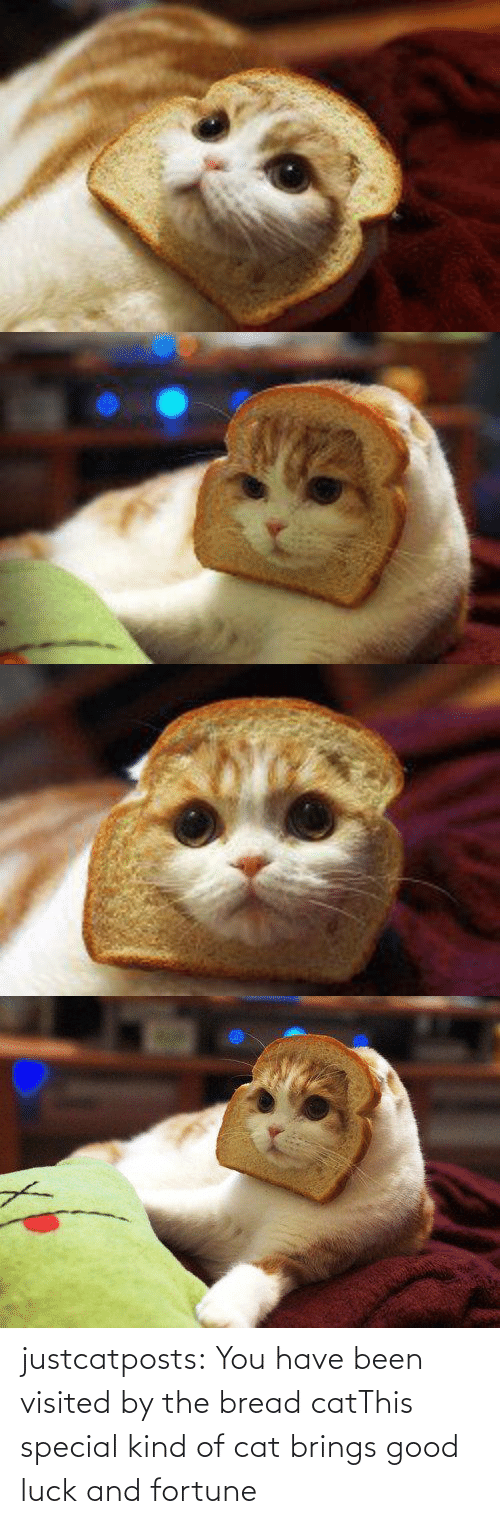 Brings: justcatposts:  You have been visited by the bread catThis special kind of cat brings good luck and fortune