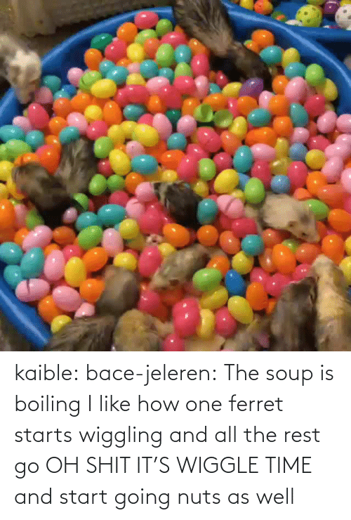 Starts: kaible: bace-jeleren: The soup is boiling    I like how one ferret starts wiggling and all the rest go OH SHIT IT'S WIGGLE TIME and start going nuts as well