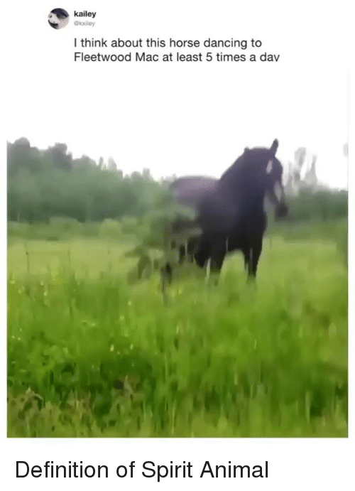 Dancing, Funny, and Animal: kailey  @kuley  think about this horse dancing to  Fleetwood Mac at least 5 times a dav Definition of Spirit Animal