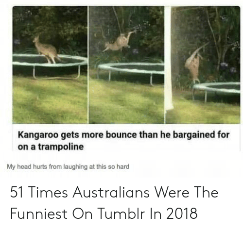 Head, Tumblr, and Trampoline: Kangaroo gets more bounce than he bargained for  on a trampoline  My head hurts from laughing at this so hard 51 Times Australians Were The Funniest On Tumblr In 2018