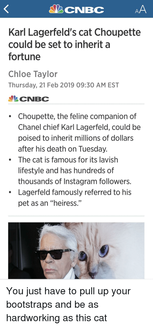 "Instagram, Chanel, and Death: Karl Lagerfeld's cat Choupette  could be set to inherit a  fortune  Chloe Taylor  Thursday, 21 Feb 2019 09:30 AM EST  CNBC  Choupette, the feline companion of  Chanel chief Karl Lagerfeld, could be  poised to inherit millions of dollars  after his death on Tuesday  The cat is famous for its lavish  lifestyle and has hundreds of  thousands of Instagram followers.  Lagerfeld famously referred to his  pet as an ""heiress."""