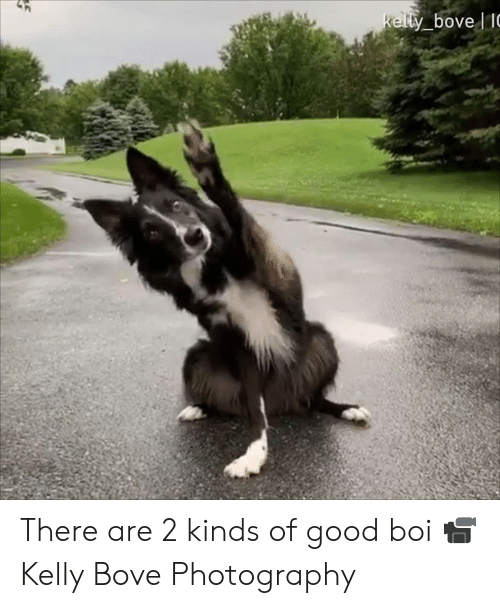 Dank, Good, and Photography: kelty bove IC There are 2 kinds of good boi  📹 Kelly Bove Photography