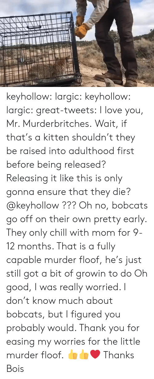 Go Off: keyhollow:  largic:  keyhollow: largic:   great-tweets:  I love you, Mr. Murderbritches.  Wait, if that's a kitten shouldn't they be raised into adulthood first before being released? Releasing it like this is only gonna ensure that they die? @keyhollow ???   Oh no, bobcats go off on their own pretty early. They only chill with mom for 9-12 months. That is a fully capable murder floof, he's just still got a bit of growin to do  Oh good, I was really worried. I don't know much about bobcats, but I figured you probably would. Thank you for easing my worries for the little murder floof.  👍👍❤️  Thanks Bois