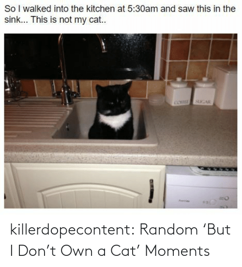add: killerdopecontent:  Random 'But I Don't Own a Cat' Moments