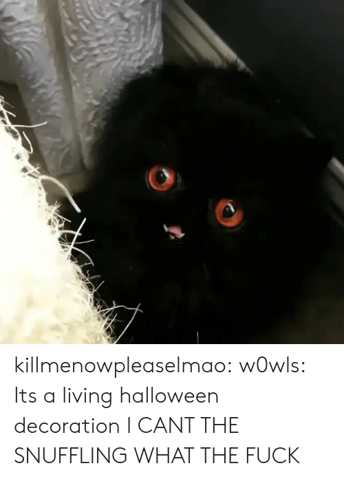 Decoration: killmenowpleaselmao: w0wls: Its a living halloween decoration I CANT THE SNUFFLING WHAT THE FUCK
