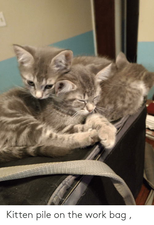 pile on: Kitten pile on the work bag ,