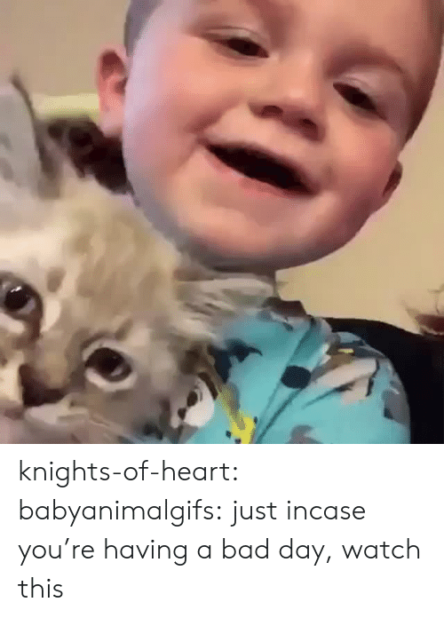 Having A Bad Day: knights-of-heart:  babyanimalgifs: just incase you're having a bad day, watch this