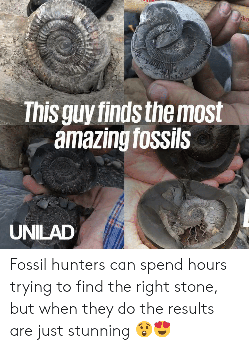 Dank, Fossil, and Amazing: ko  This guy finds the most  amazing fossils  UNILAD Fossil hunters can spend hours trying to find the right stone, but when they do the results are just stunning 😲😍