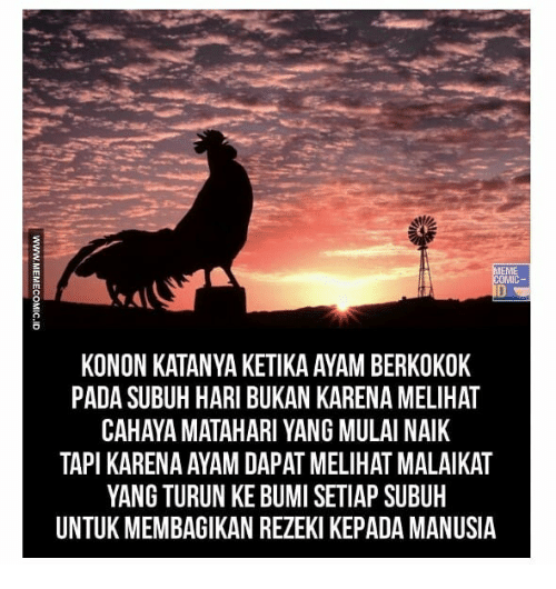 🐣 best memes about manusia manusia memes