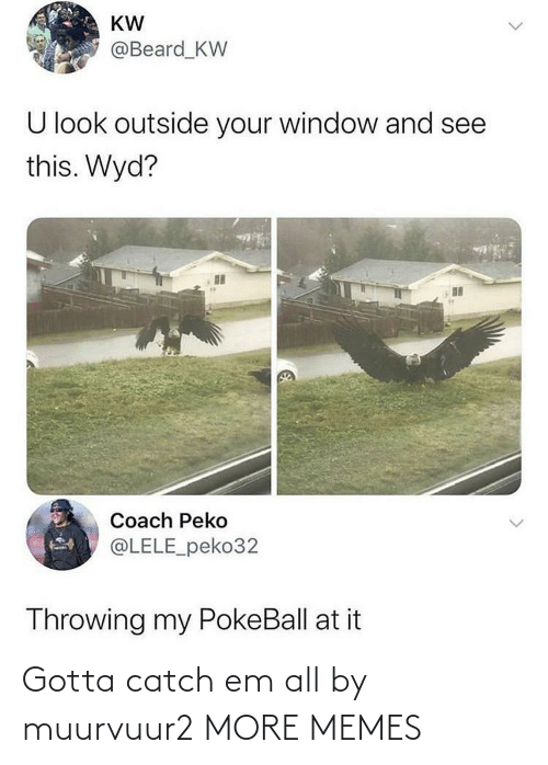Beard: KW  @Beard_KW  U look outside your window and see  this. Wyd?  Coach Peko  @LELE_peko32  Throwing my PokeBall at it Gotta catch em all by muurvuur2 MORE MEMES