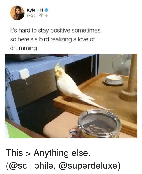 drumming: Kyle Hill  @Sci_Phile  It's hard to stay positive sometimes,  so here's a bird realizing a love of  drumming This > Anything else. (@sci_phile, @superdeluxe)
