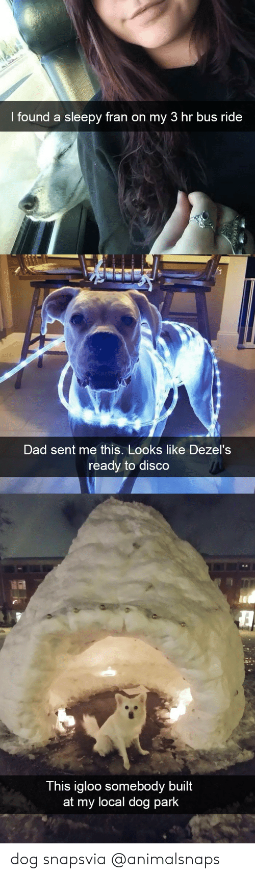 Dad, Target, and Tumblr: l tound a sleepy fra  n on my 3 hr bus ri  de   Dad sent me this. Looks like Dezel's  ready to disco   This igloo somebody built  at my local dog park dog snapsvia @animalsnaps