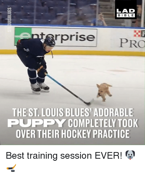 Dank, Hockey, and Best: LAD  BIBL E  rprise  PRO  THE ST. LOUIS BLUES' ADORABLE  PUPPY COMPLETELY TOOK  OVER THEIR HOCKEY PRACTICE Best training session EVER! 🐶🏒