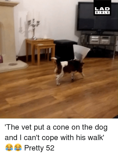 Dank, 🤖, and Dog: LAD  BIBL E 'The vet put a cone on the dog and I can't cope with his walk' 😂😂  Pretty 52