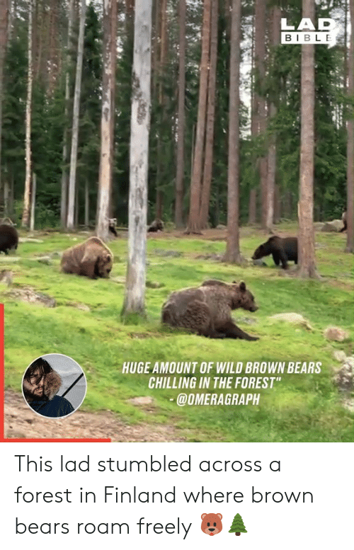 "chilling: LAD  BIBLE  HUGE AMOUNT OF WILD BROWN BEARS  CHILLING IN THE FOREST""  @OMERAGRAPH This lad stumbled across a forest in Finland where brown bears roam freely 🐻🌲"