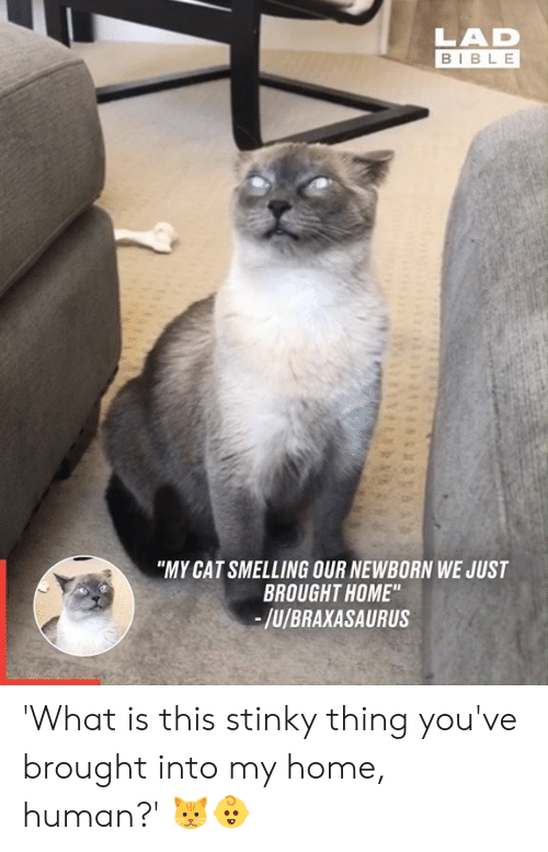 """Dank, Bible, and Home: LAD  BIBLE  """"MY CAT SMELLING OUR NEWBORN WE JUST  BROUGHT HOME""""  -/u/BRAXASAURUS 'What is this stinky thing you've brought into my home, human?' 🐱👶"""