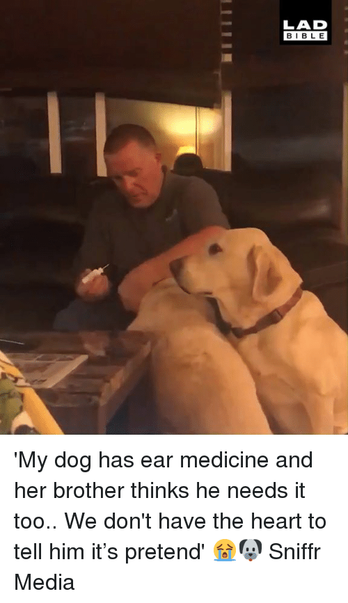 Dank, Bible, and Heart: LAD  BIBLE 'My dog has ear medicine and her brother thinks he needs it too.. We don't have the heart to tell him it's pretend' 😭🐶  Sniffr Media