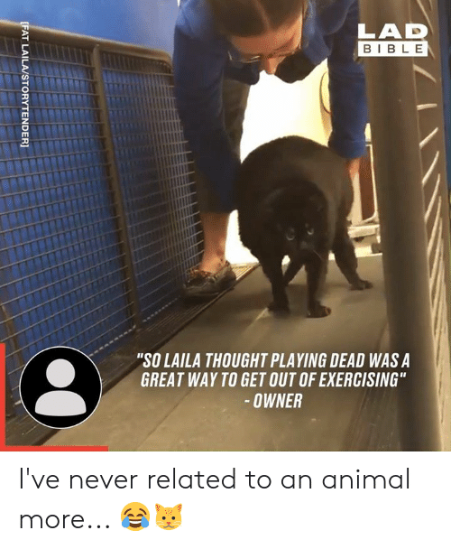 """Dank, Animal, and Bible: LAD  BIBLE  """"SO LAILA THOUGHT PLAYING DEAD WAS A  GREAT WAY TO GET OUT OF EXERCISING""""  -OWNER  [FAT LAILA/STORYTENDER] I've never related to an animal more... 😂🐱"""