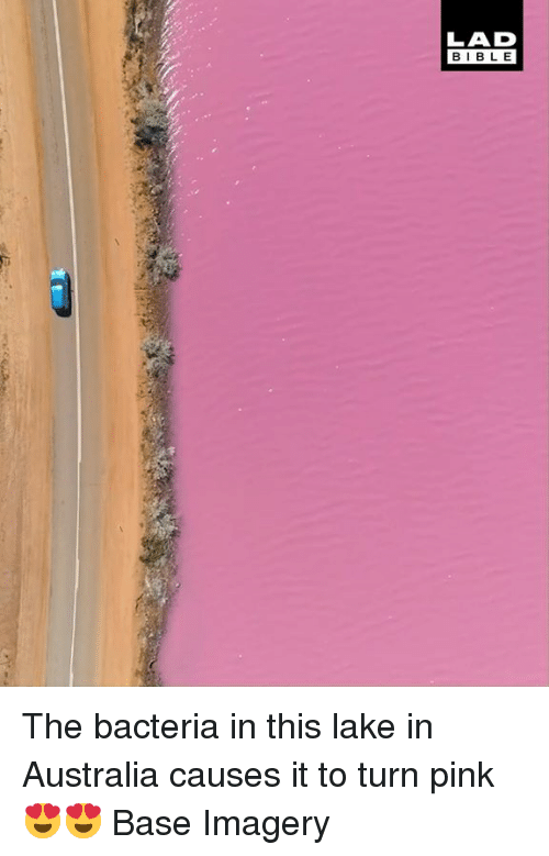 Dank, Australia, and Bible: LAD  BIBLE The bacteria in this lake in Australia causes it to turn pink 😍😍  Base Imagery