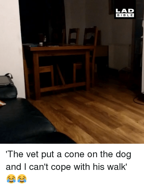 Memes, Bible, and 🤖: LAD  BIBLE 'The vet put a cone on the dog and I can't cope with his walk' 😂😂