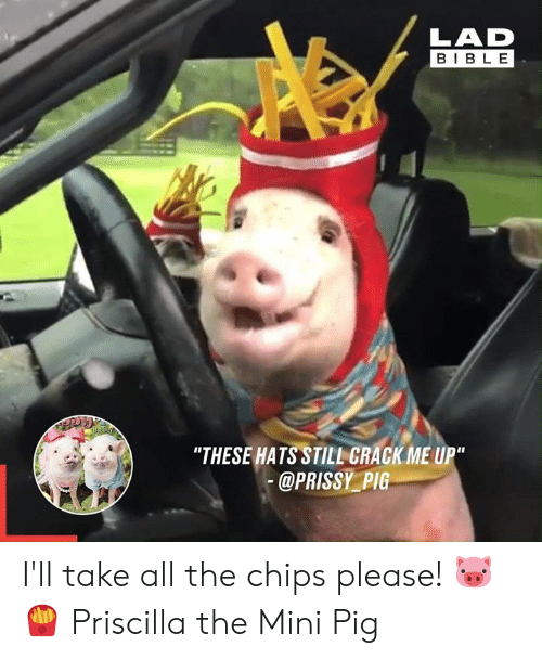 """Dank, Bible, and All The: LAD  BIBLE  """"THESE HATS STILL GRACK ME UP""""  @PRISSY PIG I'll take all the chips please! 🐷🍟  Priscilla the Mini Pig"""