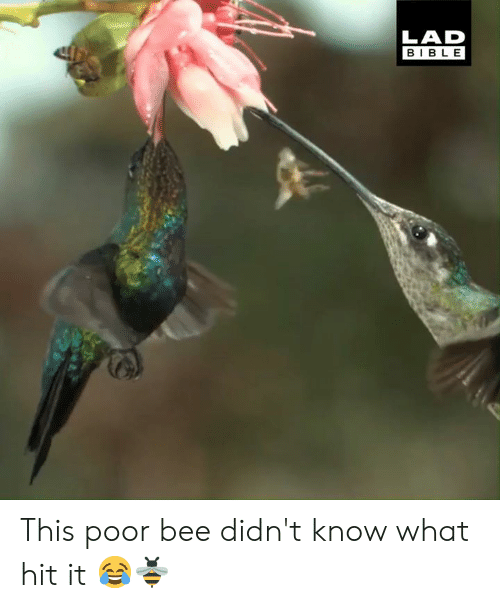 Dank, Bible, and 🤖: LAD  BIBLE This poor bee didn't know what hit it 😂🐝