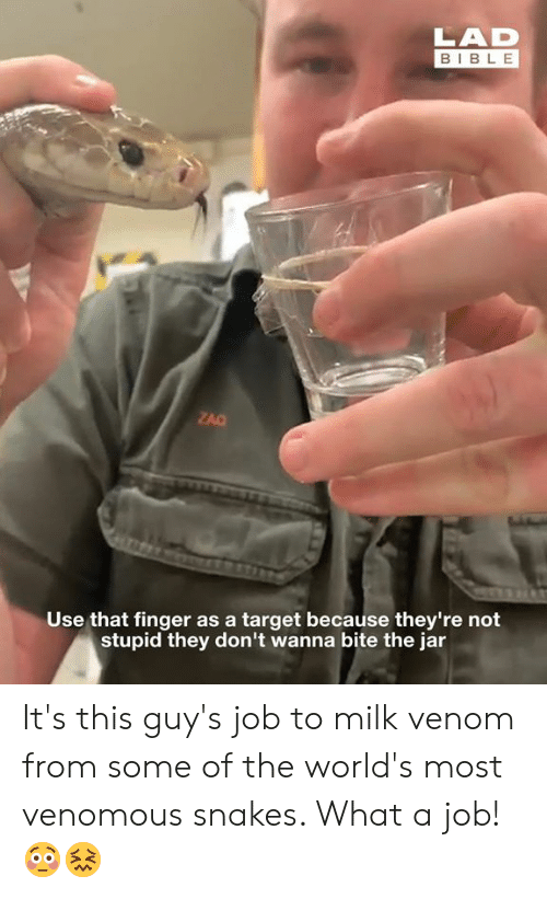 Dank, Target, and Bible: LAD  BIBLE  ZAC  Use that finger as a target because they're not  stupid they don't wanna bite the jar It's this guy's job to milk venom from some of the world's most venomous snakes. What a job! 😳😖