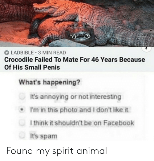 Penis: LADBIBLE 3 MIN READ  Crocodile Failed To Mate For 46 Years Because  Of His Small Penis  What's happening?  It's annoying or not interesting  P'm in this photo and I don't like it  1think it shouldn't be on Facebook  It's spam Found my spirit animal