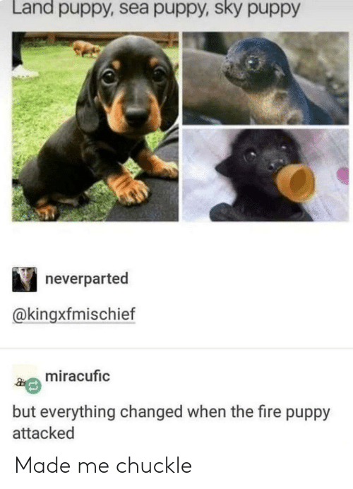 Fire, Puppy, and Sky: Land puppy, sea puppy, sky puppy  neverparted  @kingxfmischief  miracufic  but everything changed when the fire puppy  attacked Made me chuckle