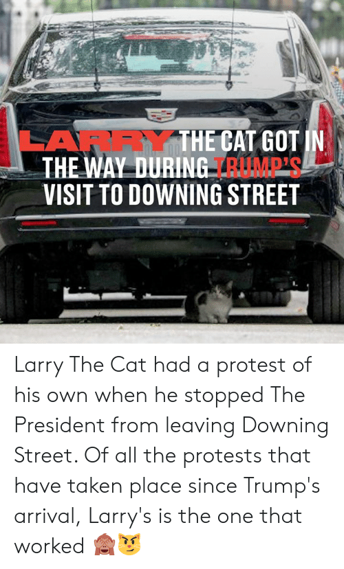 Dank, Protest, and Taken: LARRYTHE CAT GOT IN  THE WAY DURING RUMP'S  VISIT TO DOWNING STREET Larry The Cat had a protest of his own when he stopped The President from leaving Downing Street. Of all the protests that have taken place since Trump's arrival, Larry's is the one that worked 🙈😼