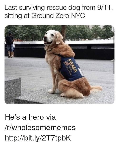 9/11, Zero, and Http: Last surviving rescue dog from 9/11,  sitting at Ground Zero NYC He's a hero via /r/wholesomememes http://bit.ly/2T7tpbK