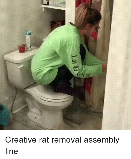 Funny, Rat, and Line: Lat 43 Creative rat removal assembly line