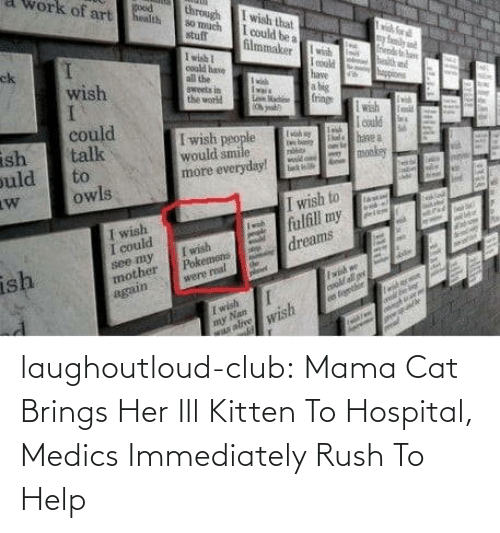 ill: laughoutloud-club:  Mama Cat Brings Her Ill Kitten To Hospital, Medics Immediately Rush To Help