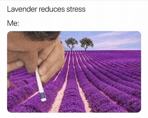 Stress and Lavender: Lavender reduces stress  Мe: